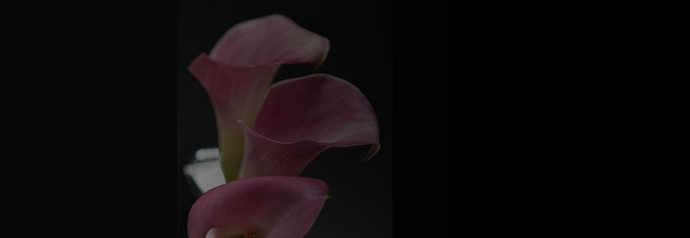 Benfield Florist: 569 Benfield Rd, Severna Park, MD