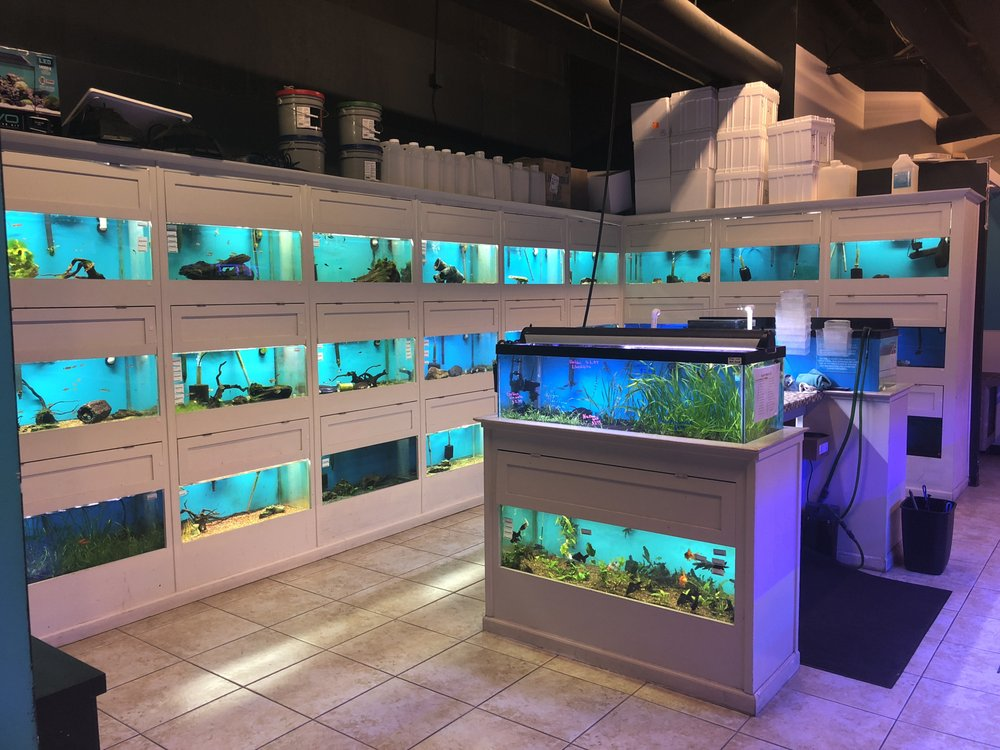 Rift 2 Reef Aquatics: 5801 Long Prairie Rd, Flower Mound, TX
