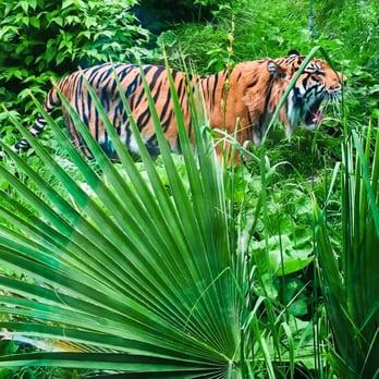 silent disco london zoo