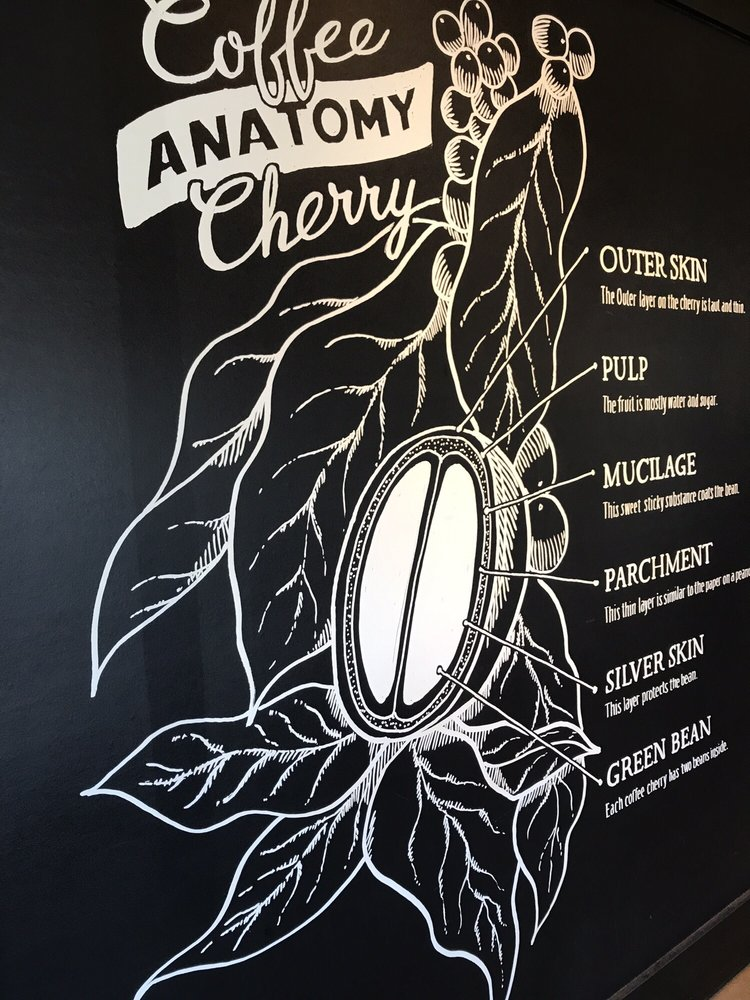 Coffee anatomy - Yelp