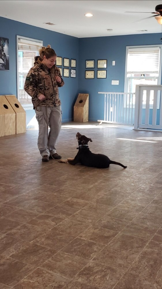 Georgia K9 NTC Dog Training: 130 Prominence Point Pkwy, Canton, GA