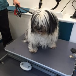 For pets sake mobile grooming pet sitting evanston il phone photo of for pets sake mobile grooming evanston il united states solutioingenieria Image collections