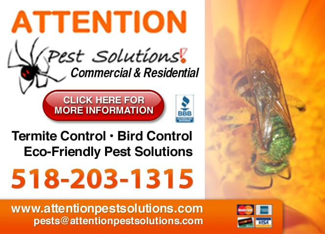 Attention Pest Solutions: 233 Greenfield Ave, Ballston Spa, NY