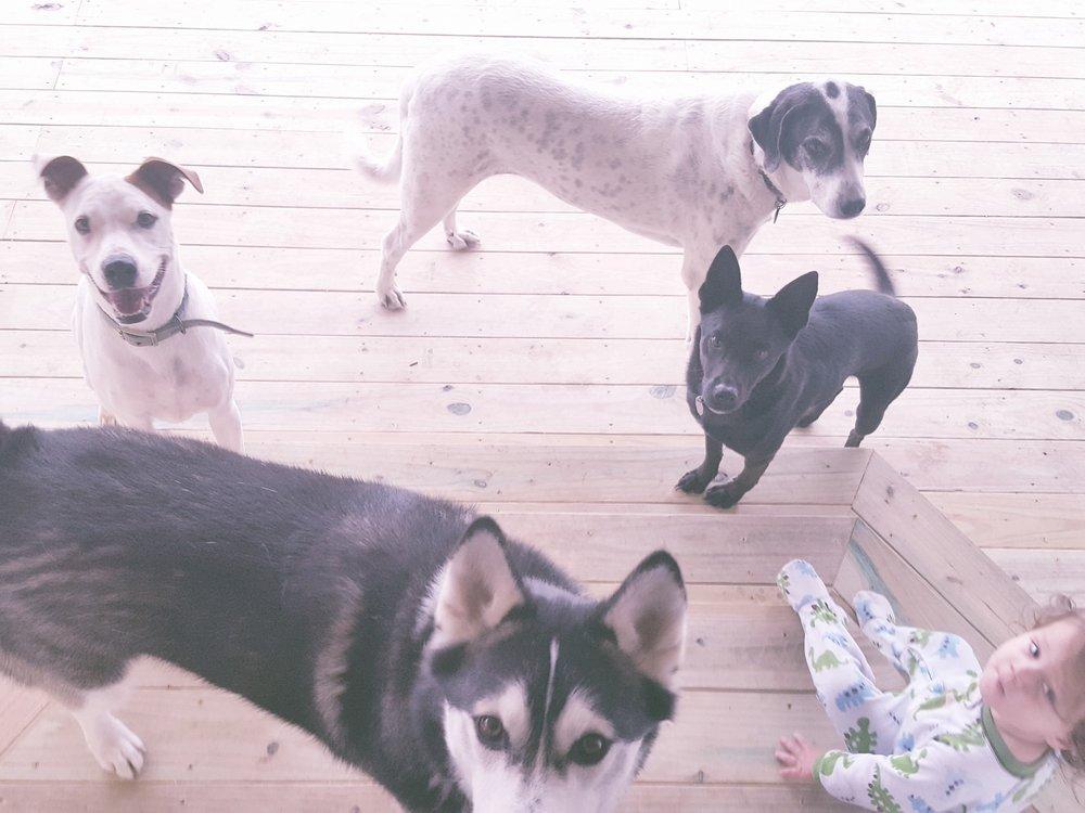 Alex's Pet Sitting and Boarding: 1684 Ilka Switch, Seguin, TX
