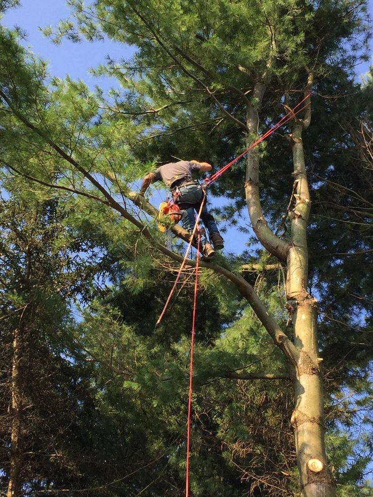Tree Wise Men: 127 Abby Rd, Dubois, PA