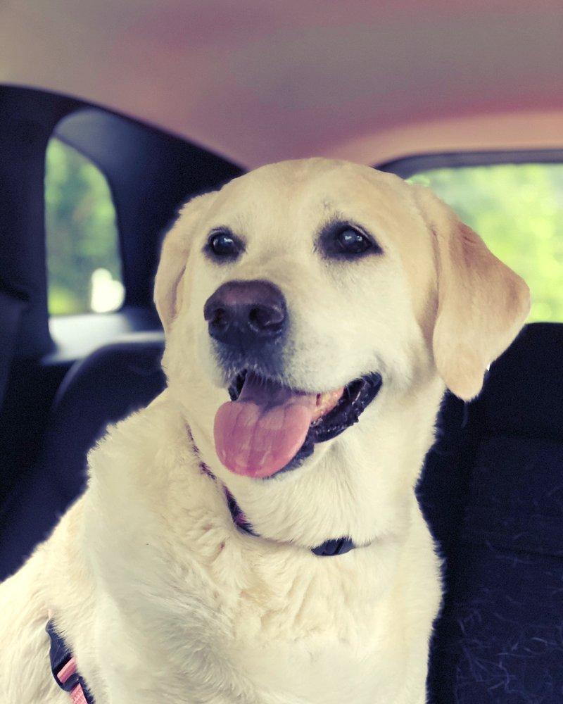 Always Compassionate Veterinary Care: 4701 Clairton Blvd, Pittsburgh, PA
