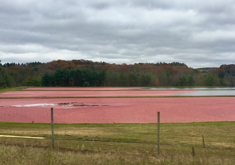 Wisconsin Cranberry Discovery Center: 204 Main St, Warrens, WI
