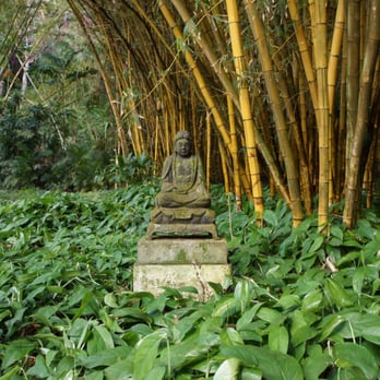 McBryde Garden Allerton Garden 244 Photos 127 Reviews