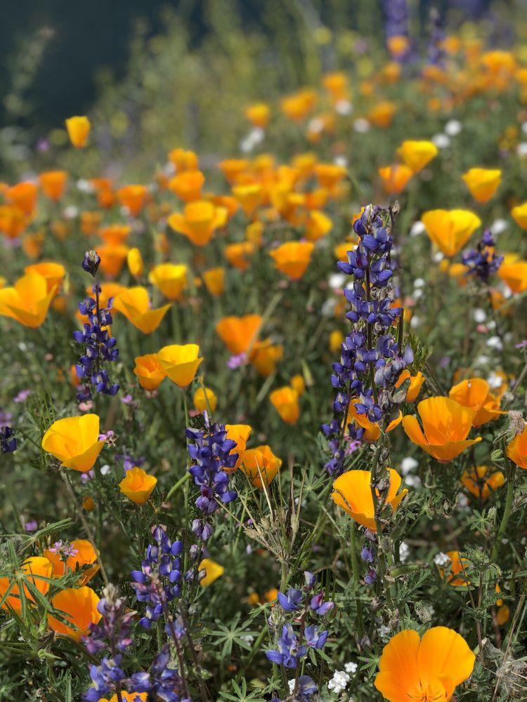 Diamond Valley Lake Visitor Center: 2325 Searl Pkwy, Hemet, CA