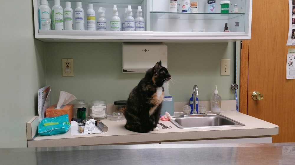Brightwood Animal Hospital: 9640 Old Johnnycake Ridge Rd, Mentor, OH