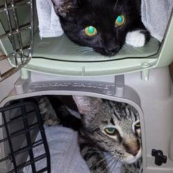 Pet Friendly Els In Amarillo Find 87 El Deals Expedia