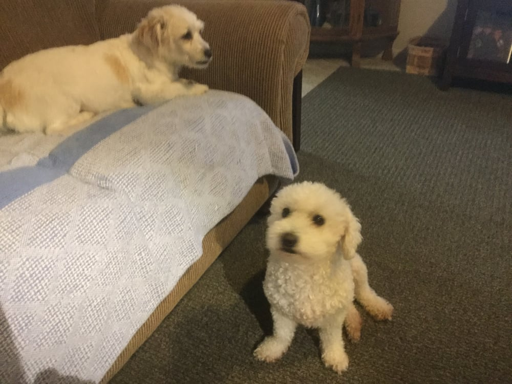 Mary Beth's Pet & House Sitting: Highland, IL