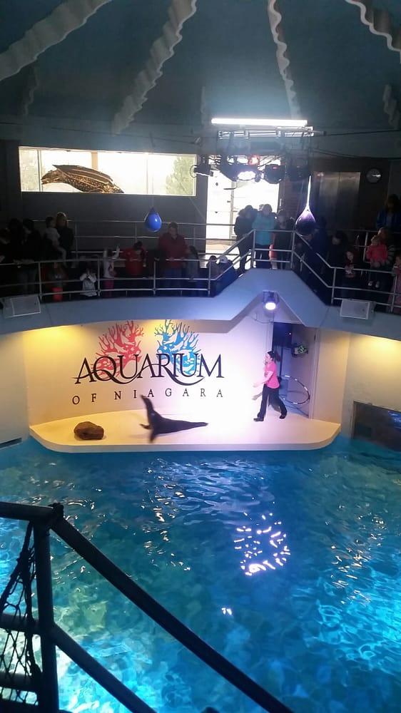 Photos For Aquarium Of Niagara Yelp