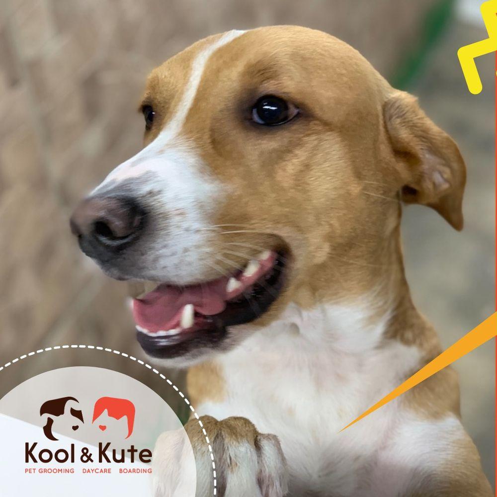 Kool & Kute
