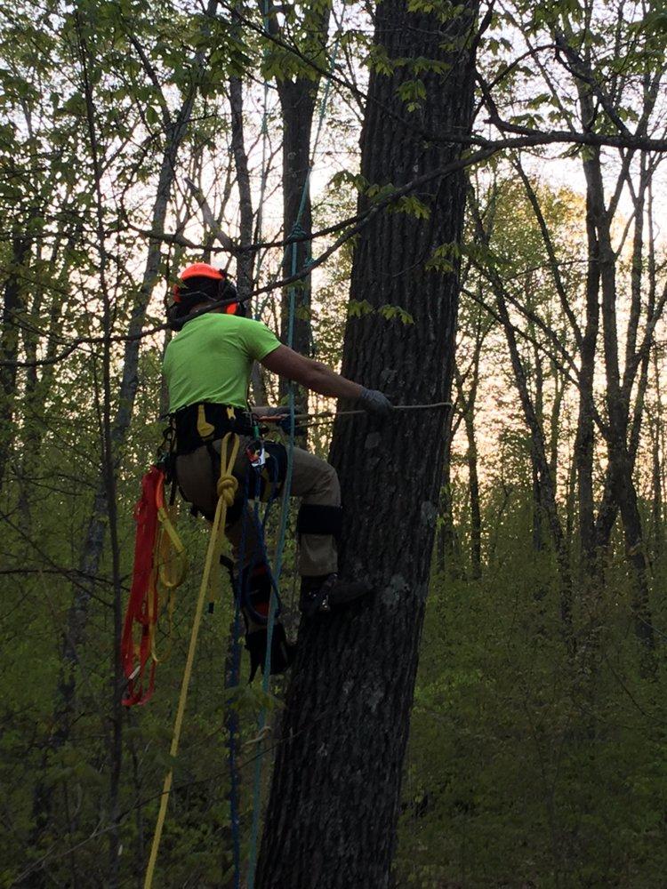 Tree APE Service: Ladysmith, WI