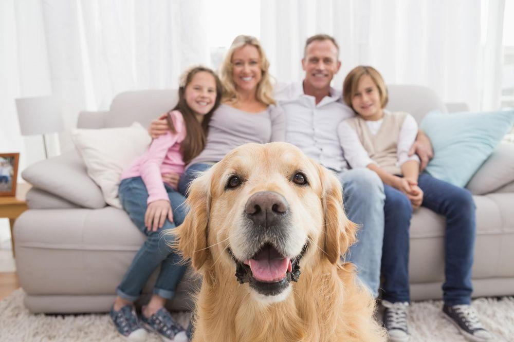 Furever Real Estate Group - Platinum Realty