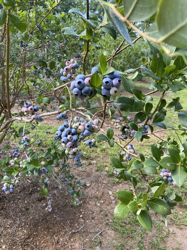 Deerhaven Blueberry Patch: 118 Raven Ridge, Hiwassee, VA