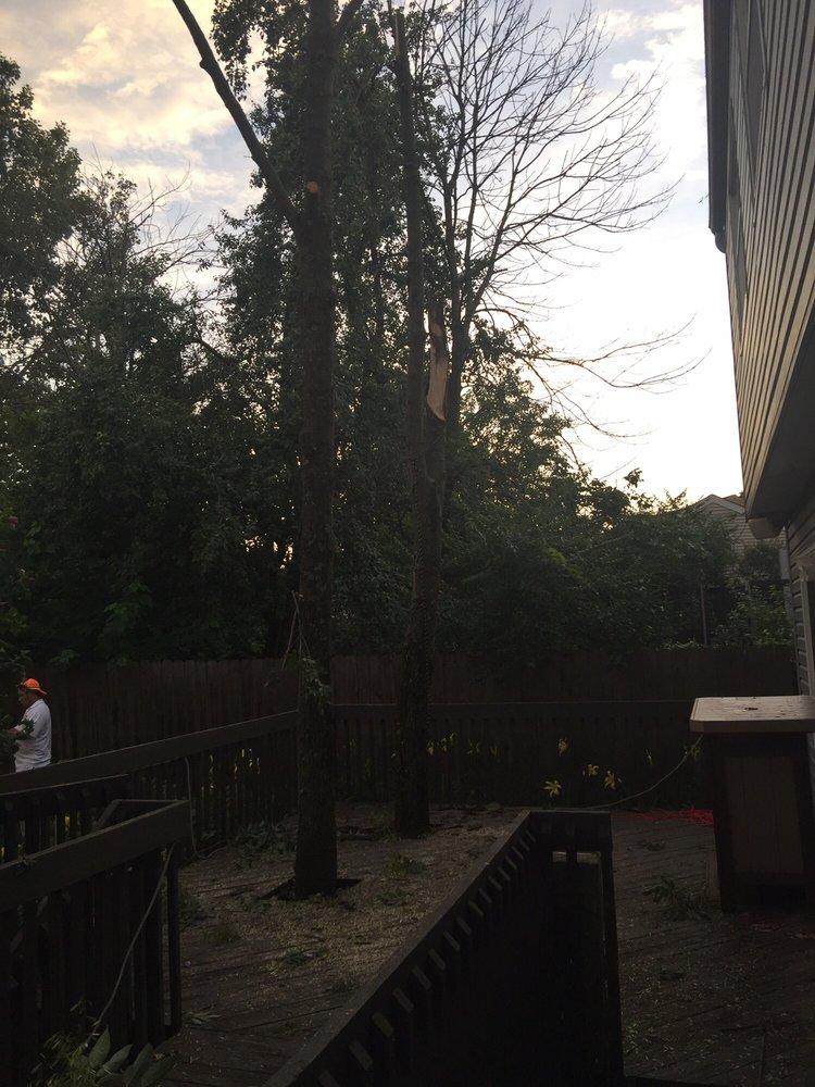 Reyes Tree Service