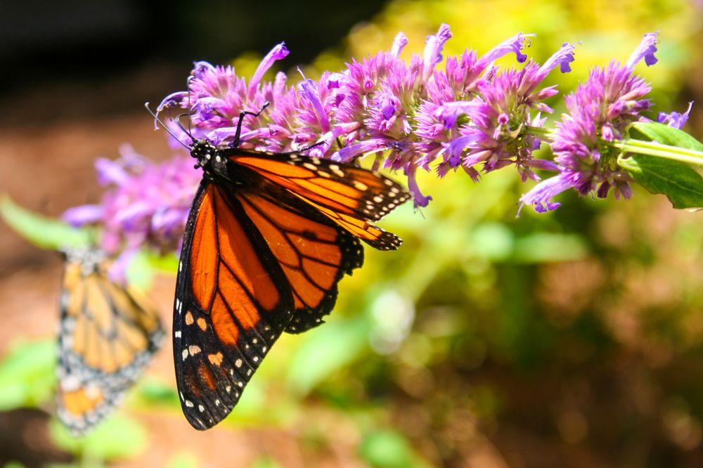 Huntsville Botanical Garden: 4747 Bob Wallace Ave SW, Huntsville, AL