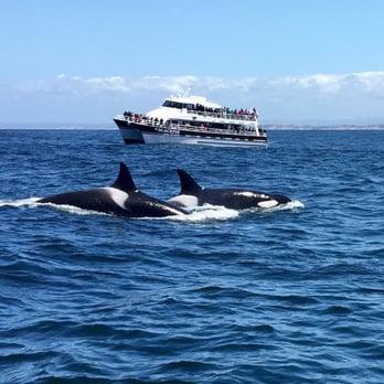 Best Whale Watching Tour Monterey Ca