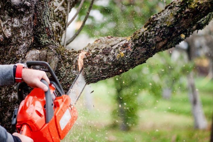 Izatt MJ Tree Service: 522 Solki Rd, Aberdeen, WA