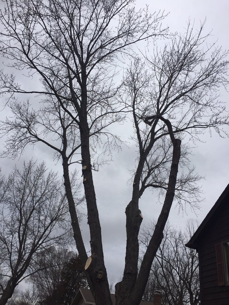 Joe's Discount Tree & Stump Service: Crown Point, IN