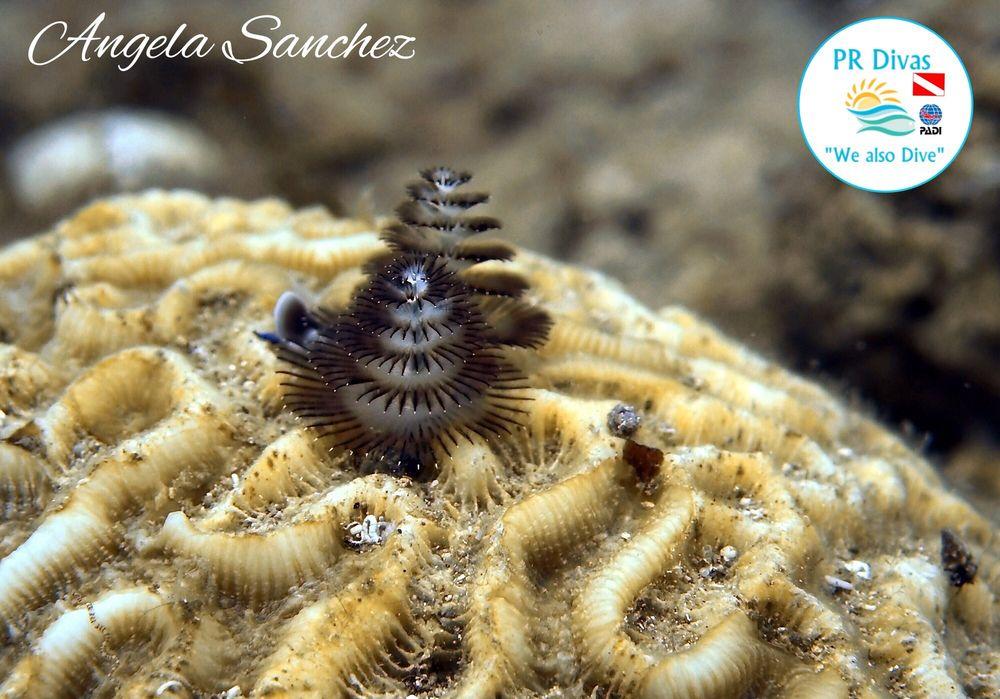 Neptunes Divers of PR: Carr. 686 Km 11.9, Vega Baja, PR