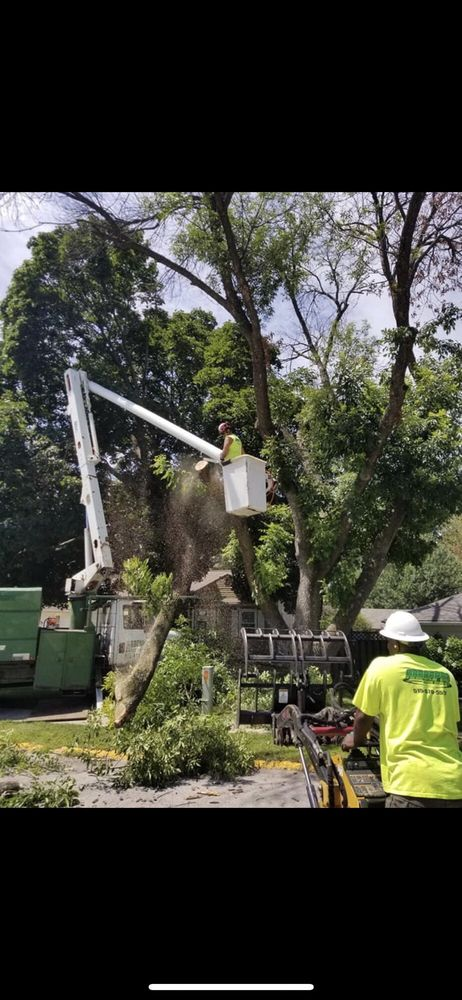 Arbor Pro Tree Service: 1343 13th Ave N, Fort Dodge, IA