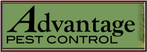 Advantage Pest Control: 6 Main St, Gray, ME