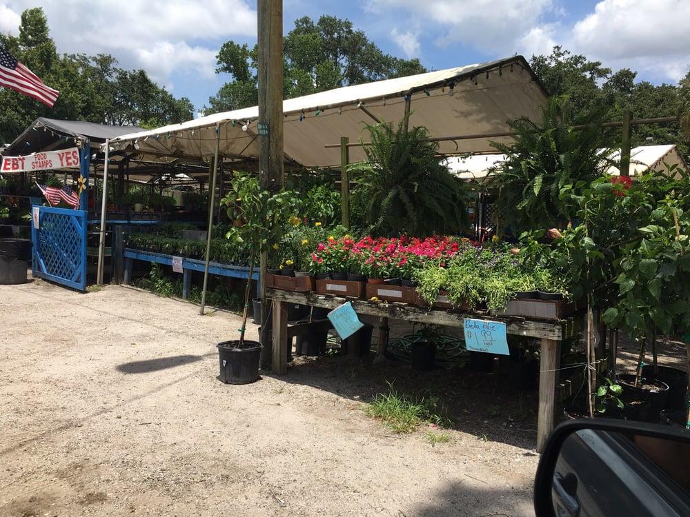 Johnson Family Farms: 1431 Branch Forbes Rd, Plant City, FL