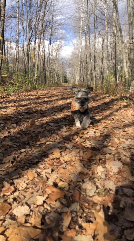 Social Spots from Bangor Dog Park