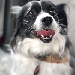 Bark Avenue Dog Grooming 22 Photos 16 Reviews Pet Groomers