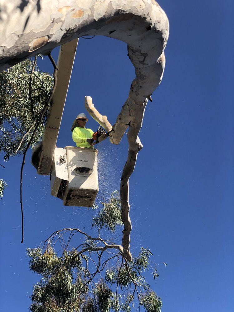 Cherry Tree Service: Anza, CA