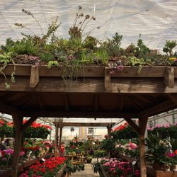 Wonderful Photo Of Rountree Plantation   Charlotte, NC, United States. Pergola  Covered With Succulents