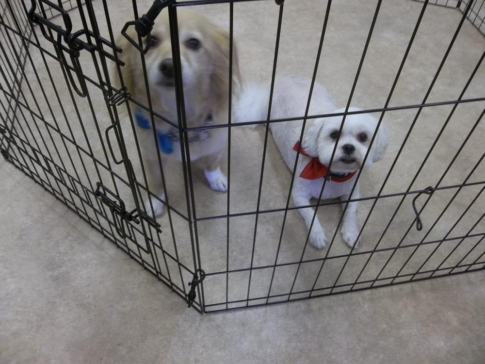 Austin Dog Grooming Coquitlam Reviews