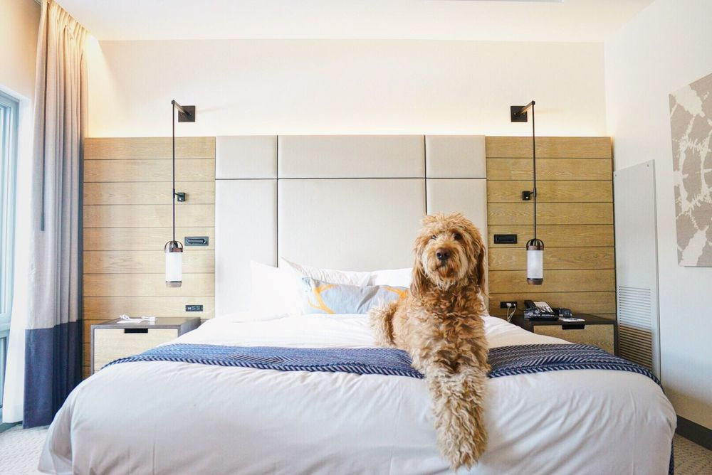 Limelight Hotel: 65 Wood Rd, Snowmass Village, CO