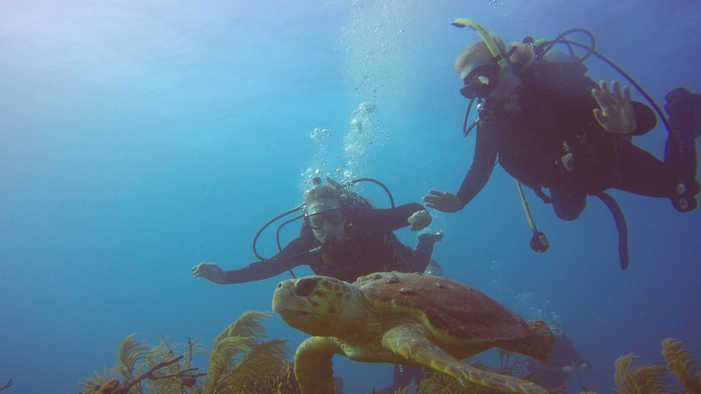 Dive Duck Key: 61000 Hawks Cay Blvd, Marathon, FL