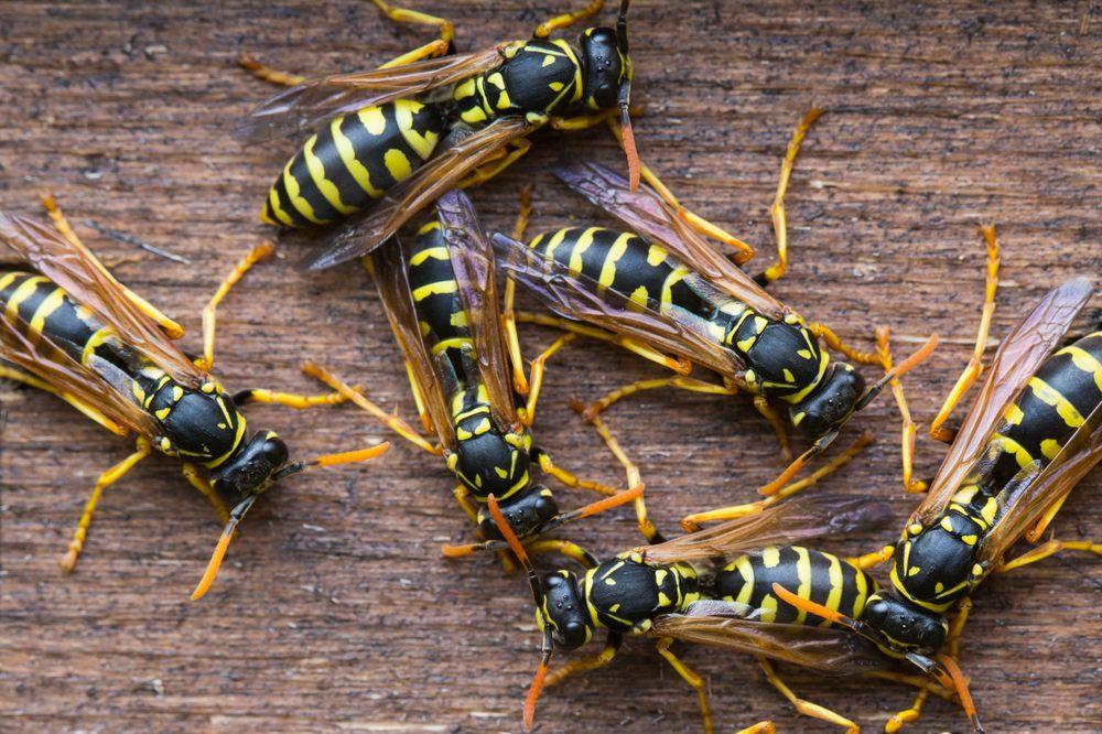 Community Pest Solutions: Ann Arbor, MI