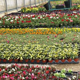 Photo Of Dabney Nursery Memphis Tn United States
