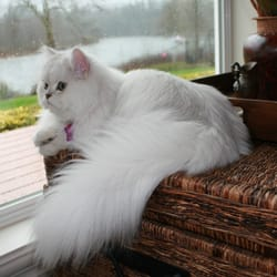 Mobile pet grooming 118 photos amp 47 reviews pet groomers