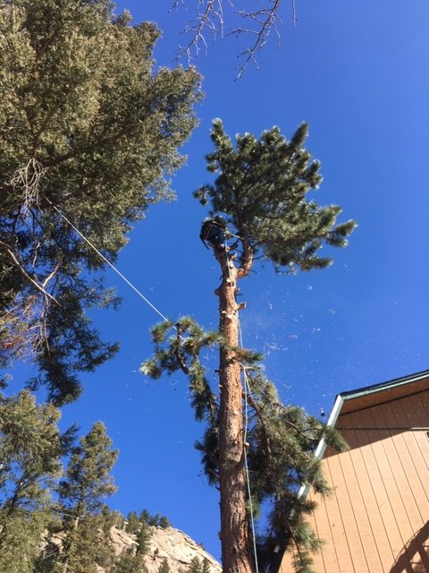 Lumber Jack's Tree Service: Conifer, CO