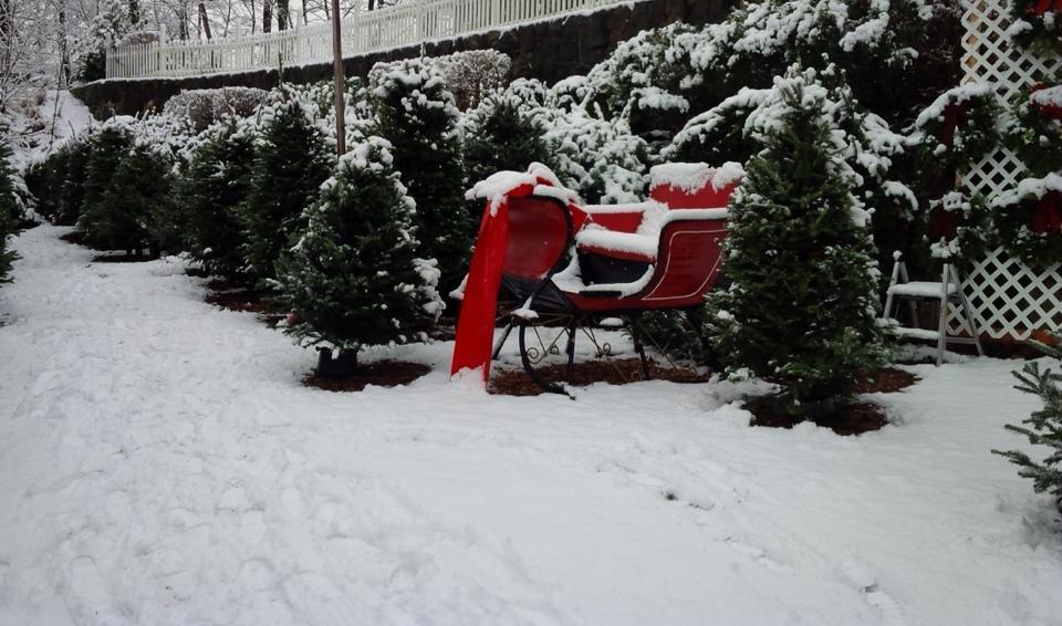 Dobbs Ferry Christmas Trees and Wreaths: 364 Ashford Ave, Dobbs Ferry, NY