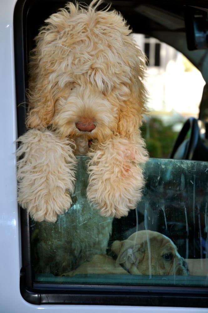 Tlc Mobile Dog Grooming
