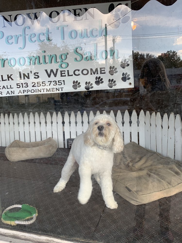Perfect Touch Grooming: 1006 Delta Ave, Cincinnati, OH