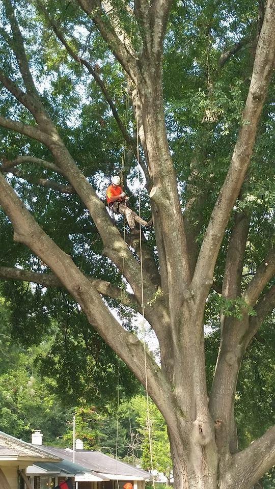 Holloway's Tree Care: 3152 Glen Springs Rd, Drummonds, TN