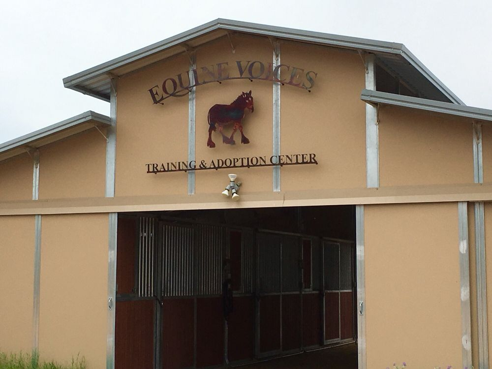 Equine Voices: Green Valley, AZ