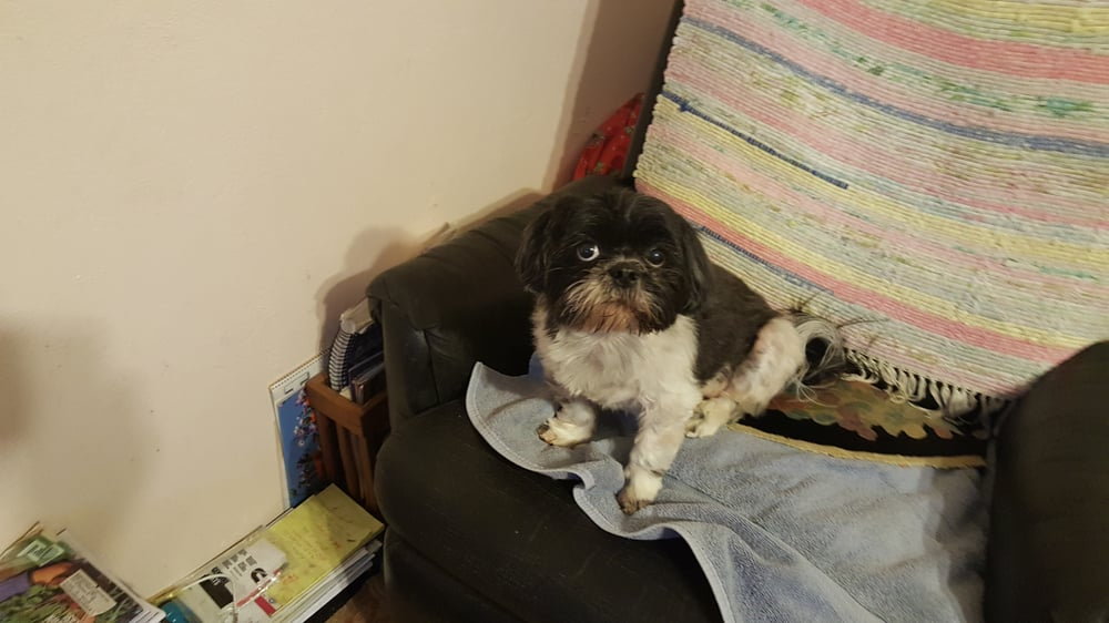Top Dog Grooming: 115 E 4th St, La Center, WA
