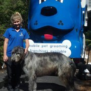 Mobile Dog Grooming Tampa