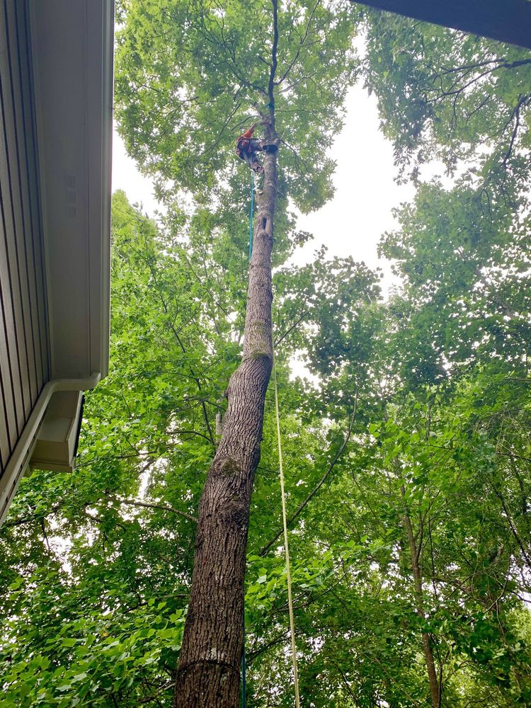 Zach's Grading & Tree Removal