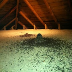 Photo Of Bat And Wildlife Solutions Hartland Mi United States Guano